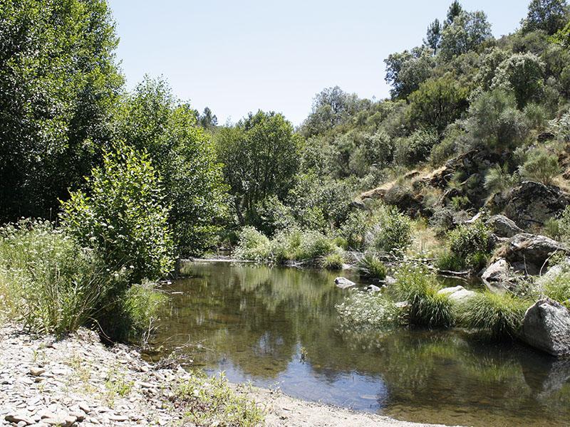Campamento La Escuela del Bosque - Hernán Pérez Extremadura